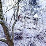 cabin_silence