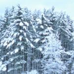 cabin_whitesatintrees